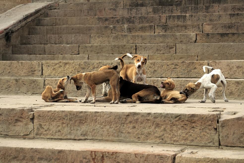Hayvan Hakları Yasa Taslağı Yolda