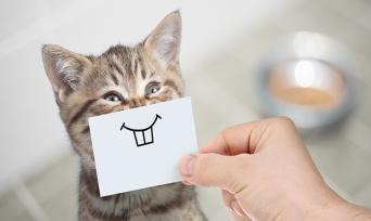 Muhteşem Hayvanlar Serisi 1: Kediler