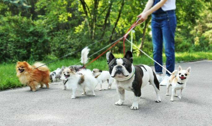 Köpek Gezdirme Hizmeti Vererek Para Kazanmak