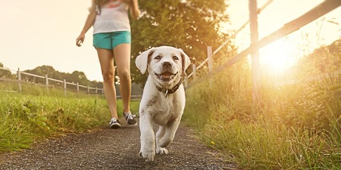 Köpekler için köpek gezdirme