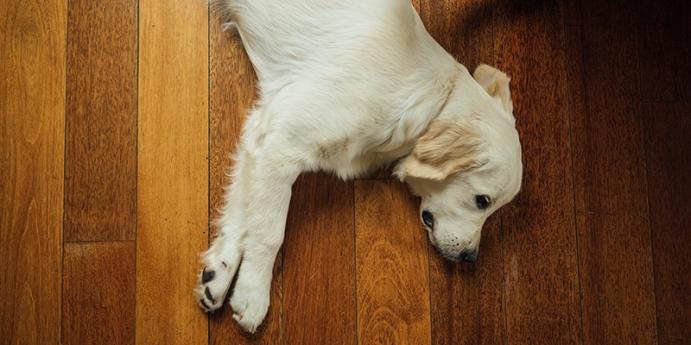 Köpeklerde sürekli halsizlik nasıl geçer?