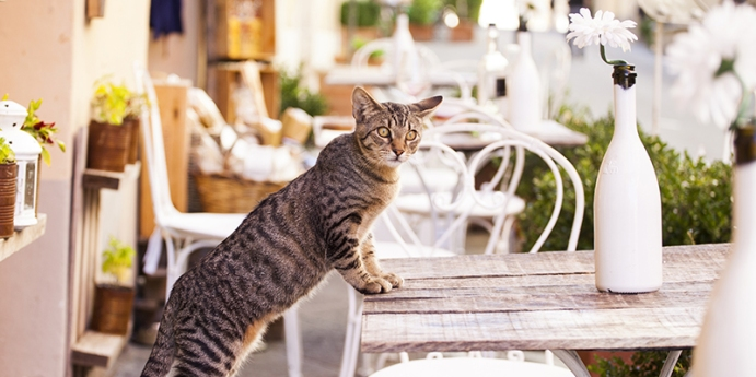 Kedi tırmalaması nasıl önlenir?