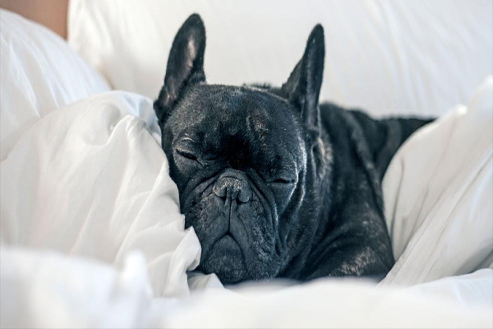 Köpek Oteli Nedir? Neden Kullanılır?