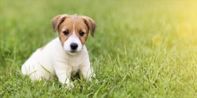 Köpek sahiplenmenin maliyeti