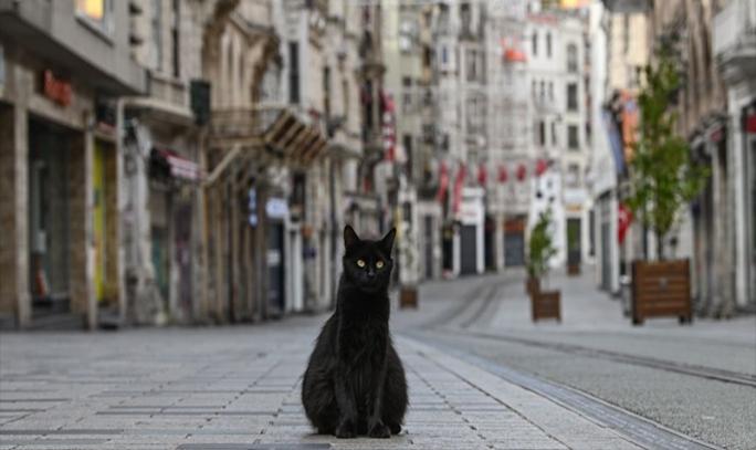 Sokak Hayvanlarını Sahiplenmek İçin 7 Sebep!
