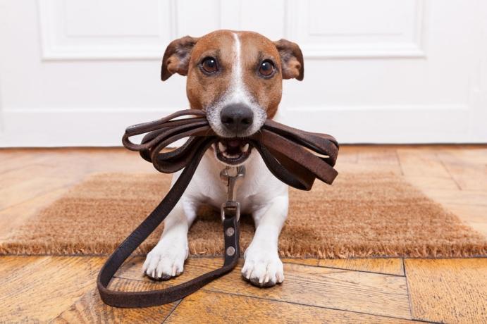 Köpek gezdirme hizmetinden kimler yararlanabilir?