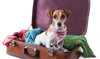 Köpek Oteli Neden Kullanılmalıdır?