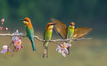 Güzelliğiyle Hayran Bırakacak Kuş Türleri