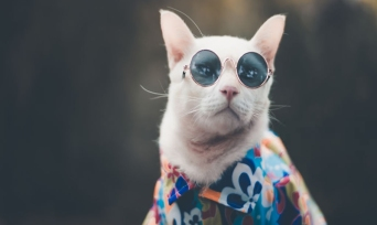 Kedi Bakıcılığı Yaparak Para Kazanmak