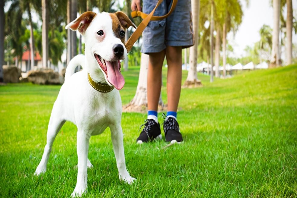 Onlar İçin En Önemlisi: Köpek Gezdirme