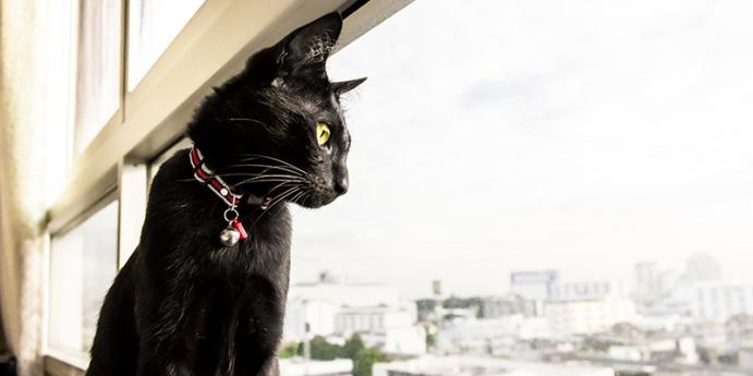 Kedi tasması seçerken dikkat edilmesi gerekenler nelerdir?