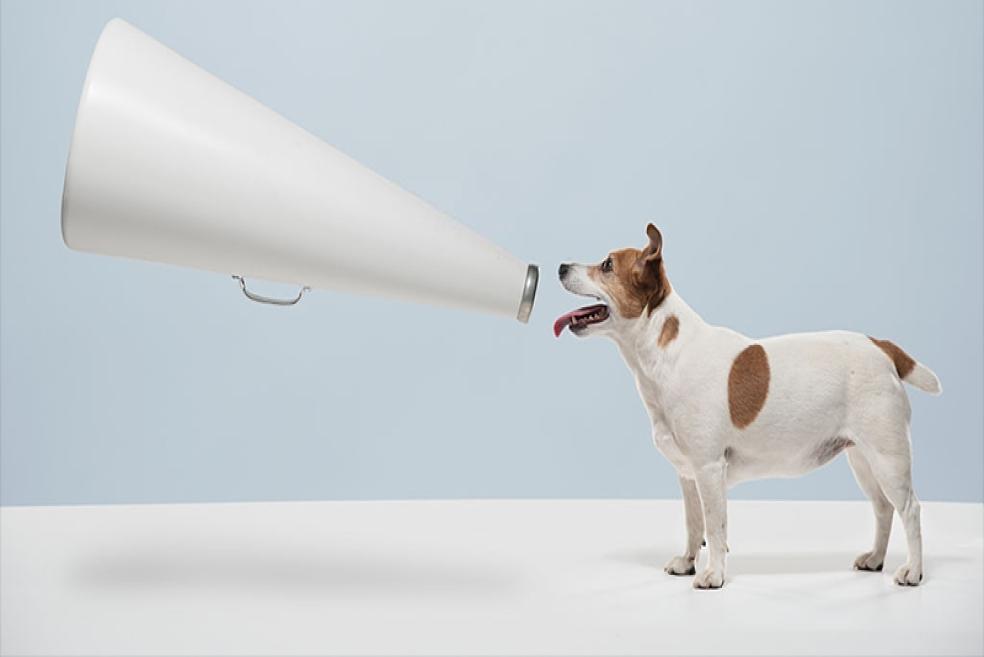Köpeğiniz Size Ne Anlatıyor?