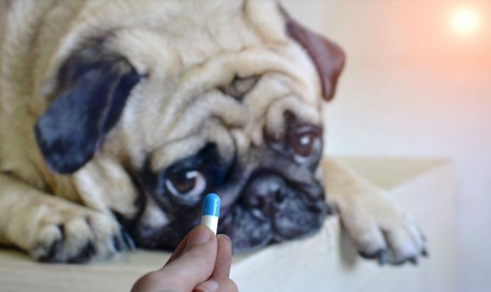 Peki köpekleri düzenli gezdirmemenin zararları nelerdir?