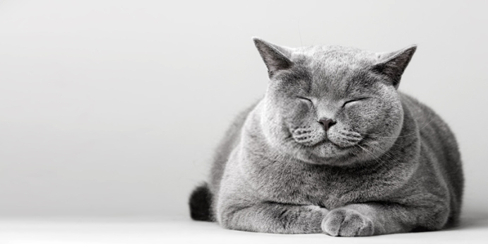 Kedi beslemek ciddi bir iştir