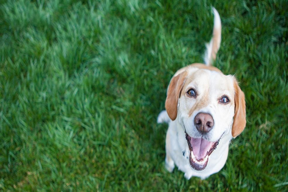 Köpeğinizle Keyifle Oynayacağınız 7 Muhteşem Köpek Oyunu!