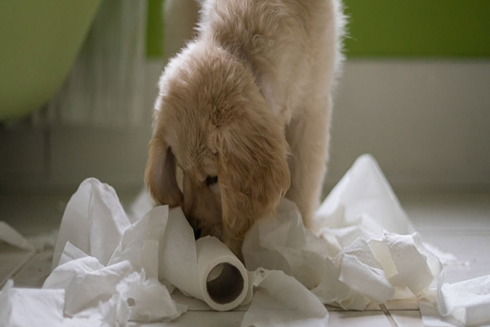 Yavru Köpeklerde Tuvalet Eğitimi