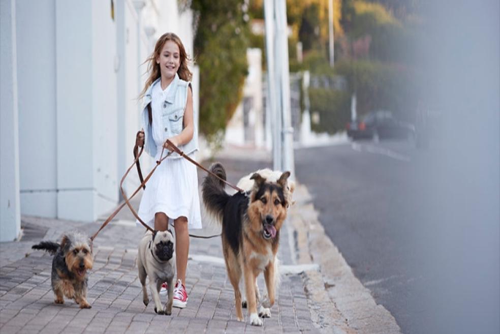 Köpek Gezdirme Hizmeti Nedir? Köpek Gezdirme Hizmeti Hakkında Bilinmesi Gerekenler!