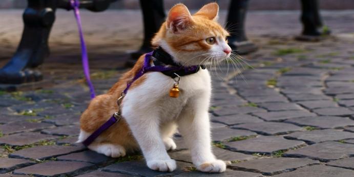Kedi tasması kullanın