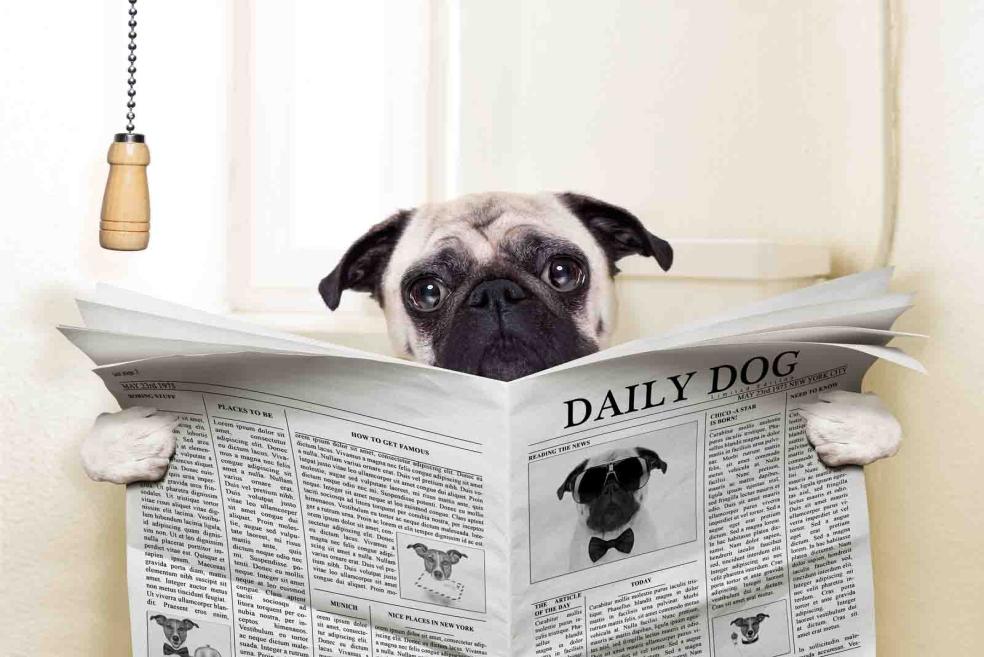 Bir Köpeğe Tuvalet Eğitimi Nasıl Verilir?