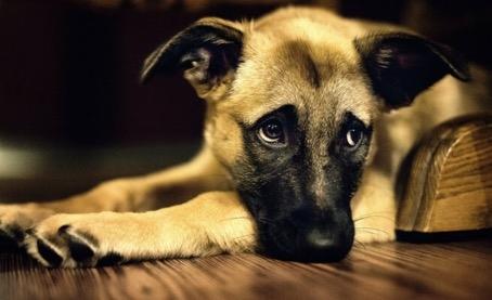 4) Köpeğinizi uzun süre yalnız bırakmak