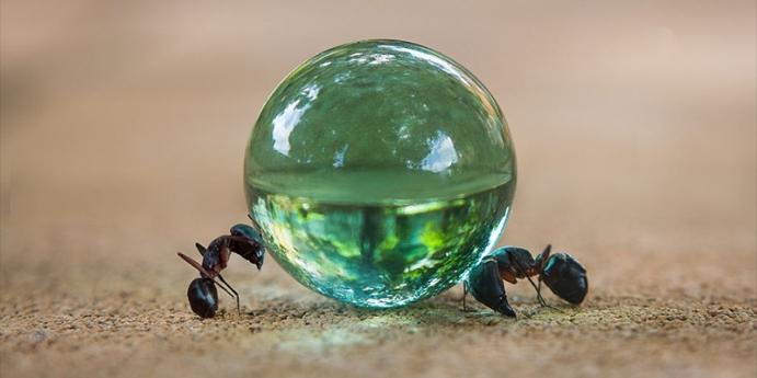 3. Karınca