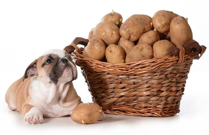 4) Patatesçi Geldi Patatesçii: Patates ve Hindili Mama