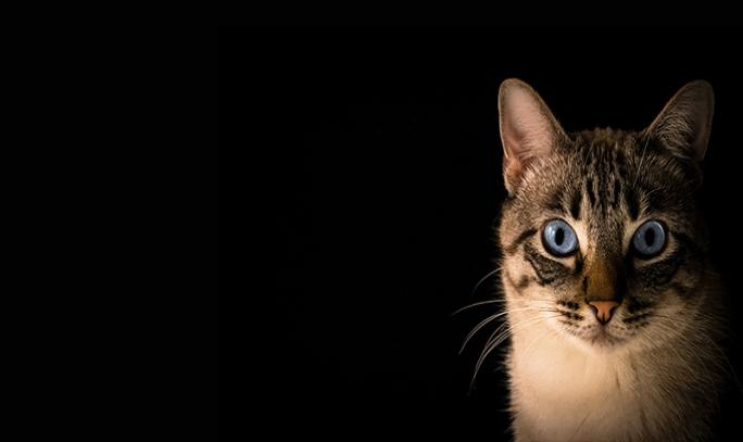 Kediler Neden Kusar? Nedenleri Ve Çözümleriyle!