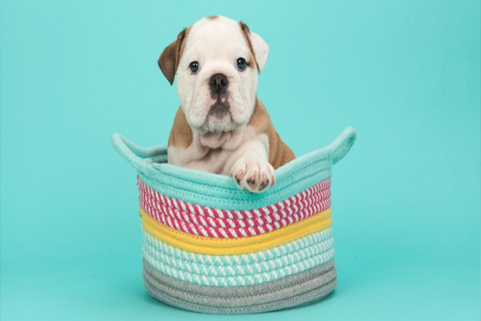 Yavru Köpek Bakımı Nasıl Yapılır? Uzmanından Tavsiyeler!