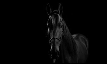 Muhteşem Hayvanlar Serisi 2: Atlar