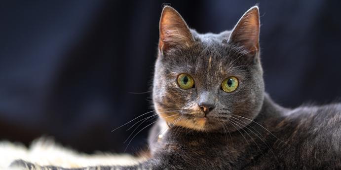 Nevi şahsına münhasır kedi isimleri