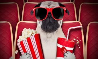 Hayvanseverlerin Bayılarak İzleyeceği 10 Film Önerisi