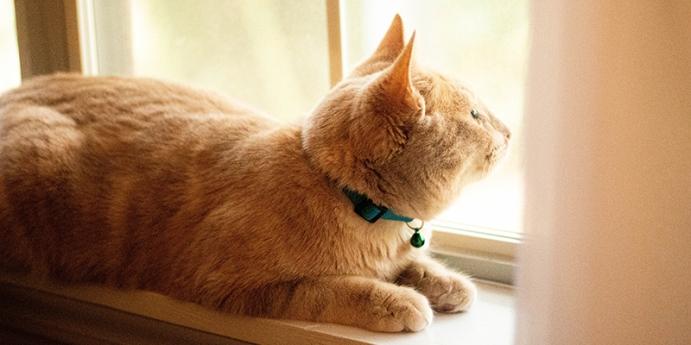 Kedi pire tasması işe yarıyor mu?