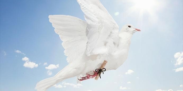 7. Güvercin