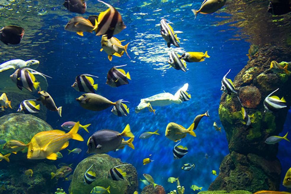 Evde Beslenebilen 7 Sıra Dışı Akvaryum Balığı