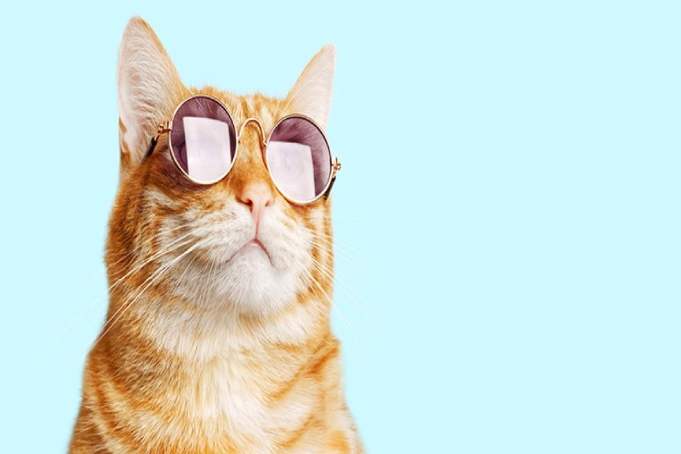 Muhteşem Kedi İsimleri!