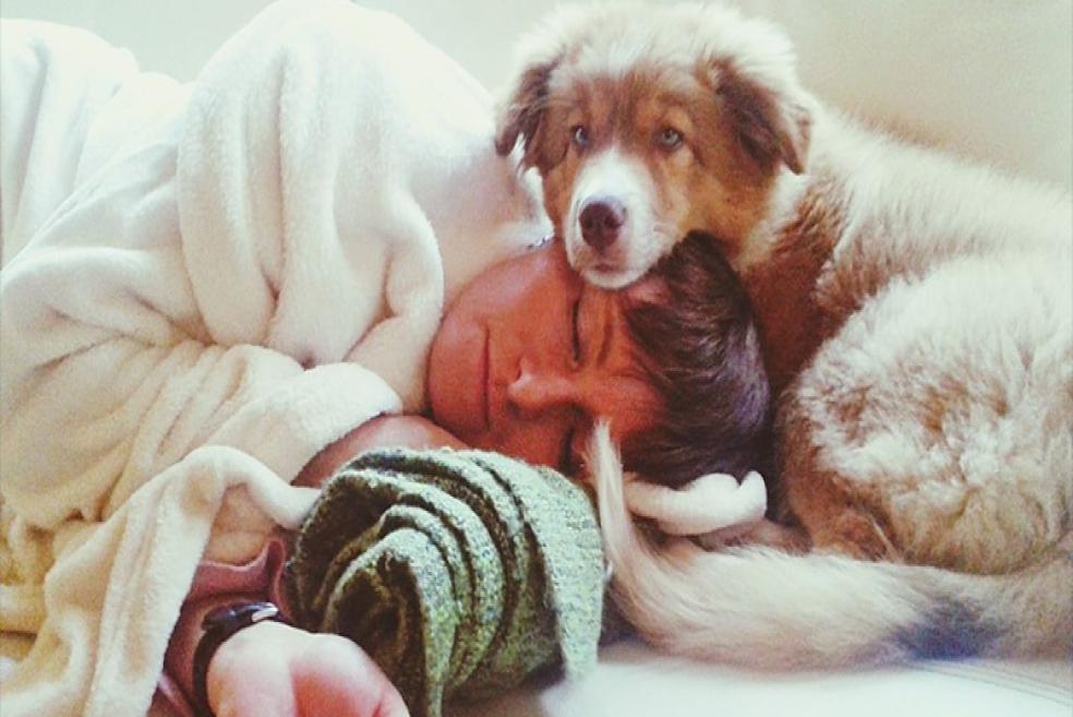 Köpekler Neden Sahipleriyle Uyumak İster?