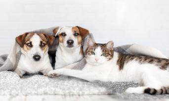 Sıra Dışı Kedi ve Köpek İsimleri