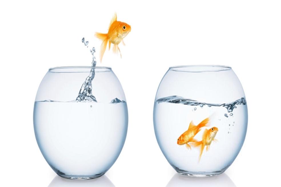 Beslenmesi Kolay Balık Türleri - 10 Öneri