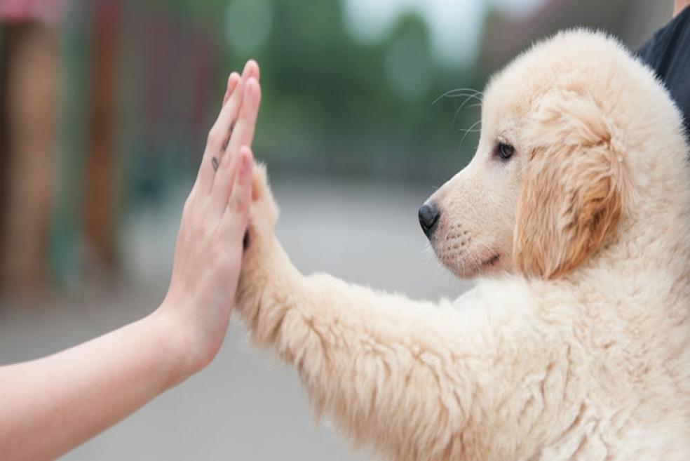 Köpek Irkları Nelerdir? Görseller ve Açıklamalar ile Anlatım
