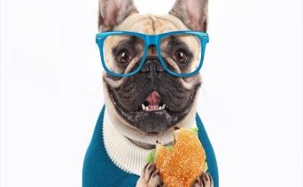 Köpeklerin Tüketmemesi Gereken Yiyecekler Nelerdir?