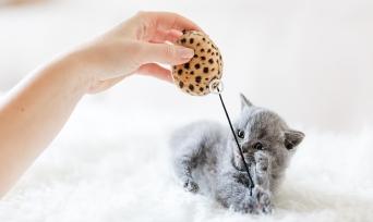 Yavru Kedi Bakımı Nasıl Yapılır? Uzmanından Tavsiyeler!