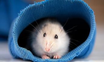Muhteşem Hayvanlar Serisi 5: Hamsterlar