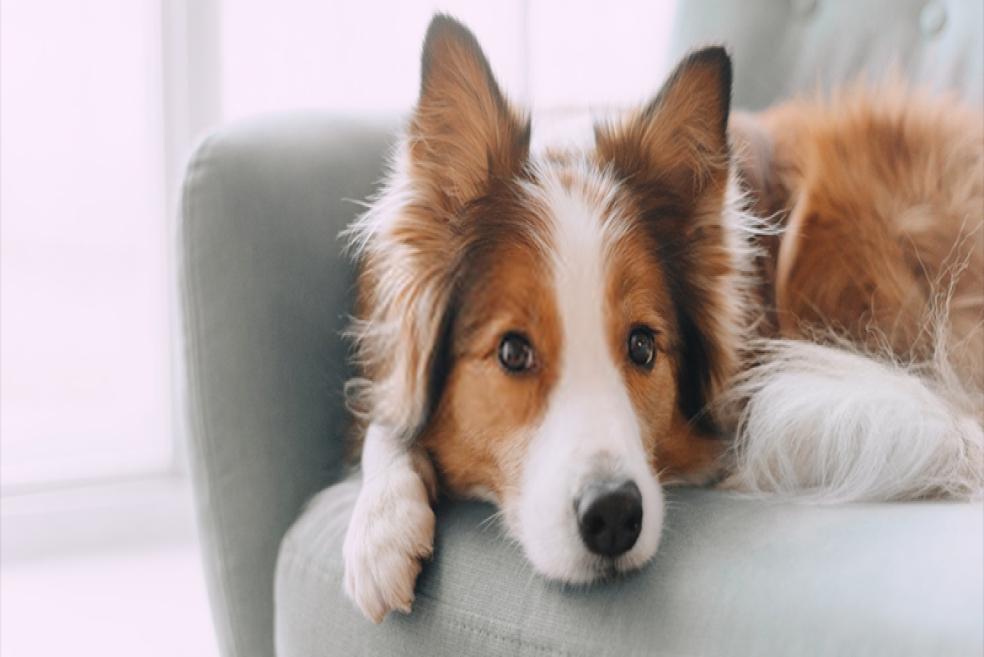Deprem Sensörü Köpekler
