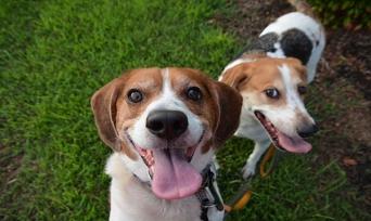 Köpek Anaokulu (Kreşi) ve Fiyatları Hakkında Bilmeniz Gereken 10 Şey