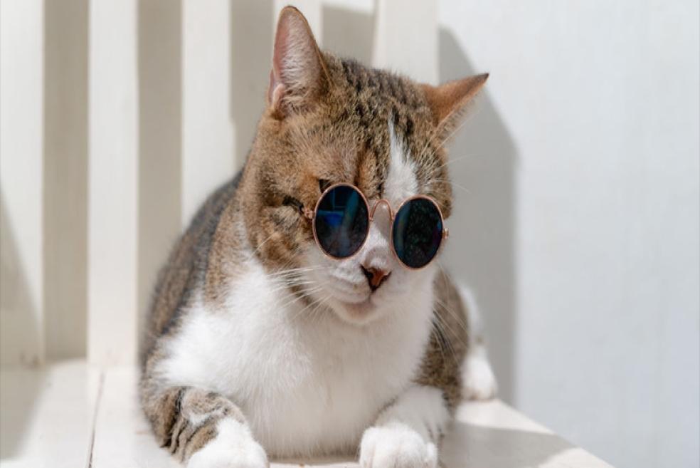 Kediniz Size Ne Anlatıyor?