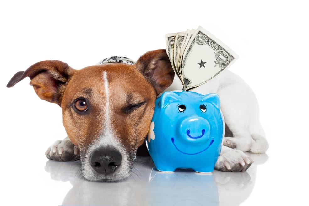 Bir Köpek Sahiplenmeden Önce Ne Kadar Bütçe Ayırmalıyız?