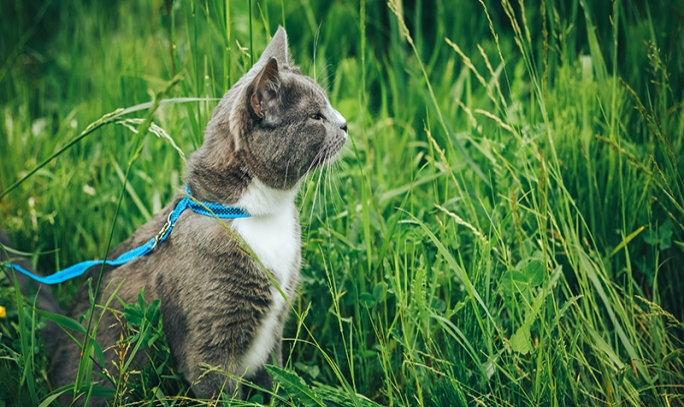 Kedi Gezdirme Nedir? Uzmanından Tüyolar!