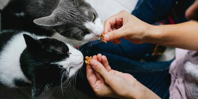 4. Tavuklu ve havuçlu ev yapımı kedi maması tarifi