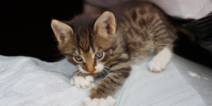 Duygu durumlarında kedi tırmalaması