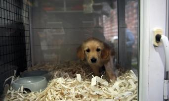 Petshoplarda Artık Kedi ve Köpek Satılmayacak